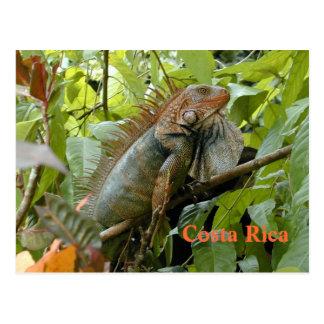 Iguana Costa Rica do cartão Cartão Postal
