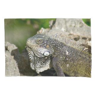 Iguana, Curaçau, ilhas das Caraíbas, foto