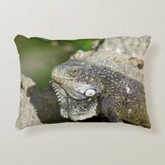 Iguana, Curaçau, ilhas das Caraíbas, foto Almofada Decorativa