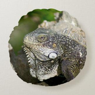 Iguana, Curaçau, ilhas das Caraíbas, foto Almofada Redonda