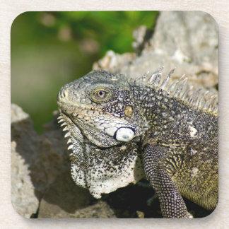 Iguana, Curaçau, ilhas das Caraíbas, foto Porta-copo