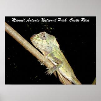 Iguana nacional de Manuel Antonio Costa Rica Posteres