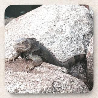 Iguana selvagem porta-copo