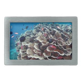 Ilha coral