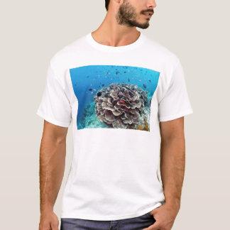Ilha coral camiseta