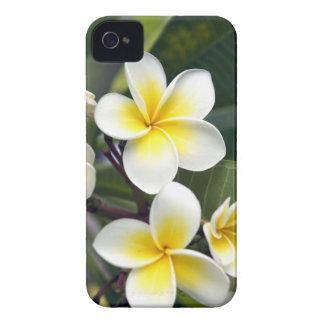 Ilhas Cook da flor do Frangipani Capinha iPhone 4