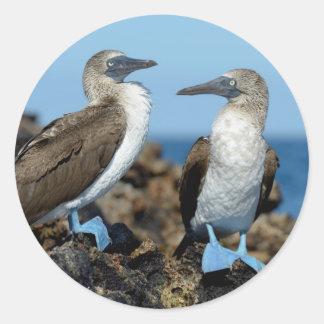 Ilhas Galápagos, ilha de Isabela Adesivo Em Formato Redondo