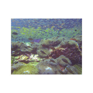 Ilhas subaquáticas Tailândia de Similan do paraíso