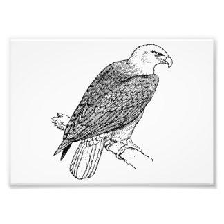 Ilustração americana empoleirando-se da águia amer