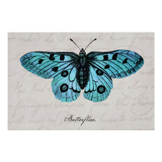 Ilustração azul da borboleta da cerceta do vintage pôster