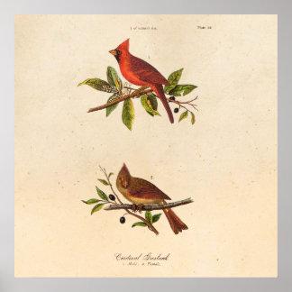 Ilustração cardinal do pássaro da canção do pôster