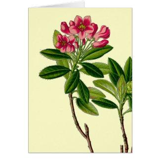 Ilustração cor-de-rosa do rododendro cartão