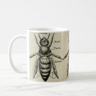 Ilustração da anatomia da abelha - caneca do