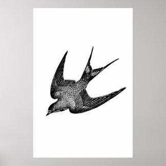 Ilustração da andorinha do vintage - pássaro 1800 impressão