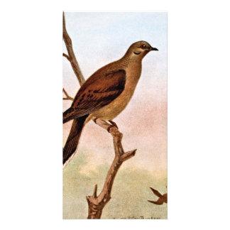 Ilustração de lamentação do vintage da pomba cartão com foto