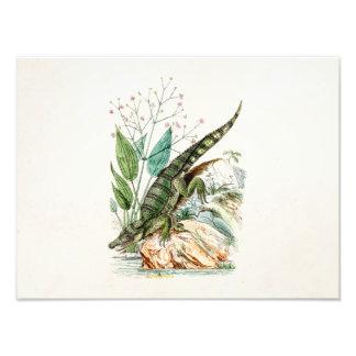 Ilustração do crocodilo do jacaré dos 1800s do vin impressão de foto