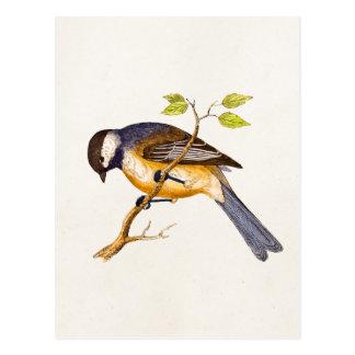 Ilustração do pássaro da canção do vintage - cartão postal