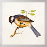 Ilustração do pássaro da canção do vintage - pássa pôsteres