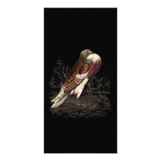 Ilustração do pombo do vintage - modelo do pássaro cartão com foto