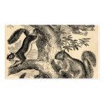 Ilustração dos esquilos dos 1800s do vintage - esq cartão de visita
