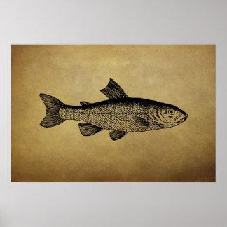 Ilustração dos peixes do vintage poster