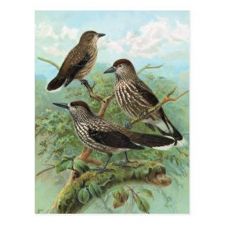 Ilustração manchada do pássaro do vintage do cartão postal