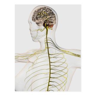 Ilustração médica do sistema nervoso humano cartao postal