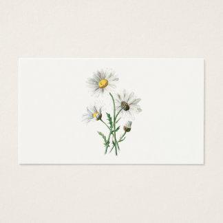 Ilustração velha da flor selvagem das margaridas cartão de visitas