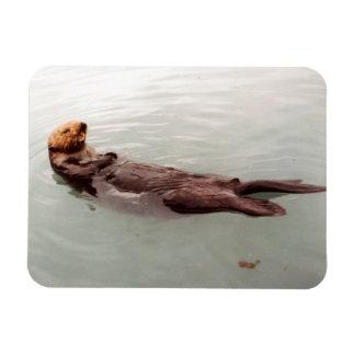 Ímã A foto bonito da lontra de mar de Alaska projetou