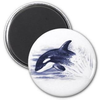 Imã A orca do bebê salta