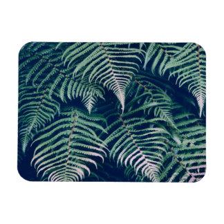 Ímã A samambaia tropical verde sae do teste padrão