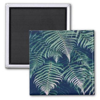 Imã A samambaia tropical verde sae do teste padrão