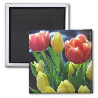Imã A tulipa vermelha & amarela romântica floresce a