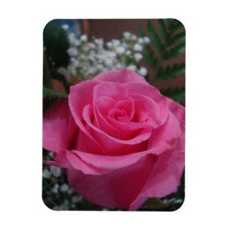 Ímã A única haste cor-de-rosa aumentou