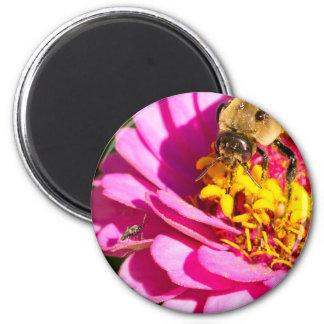 Imã abelha e inseto que estão em uma flor roxa