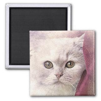 Imã Aguarela do abstrato | do gatinho | do tempo do