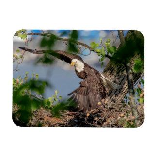 Ímã Águia americana que sae do ninho