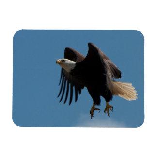 Ímã Águia americana que toma o vôo com as garras