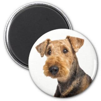 Imã Airedale Terrier Brown & cão de filhote de