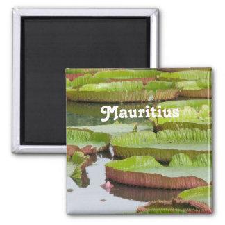 Imã Almofadas de lírio de Maurícia