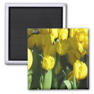 Ímã amarelo das tulipas ímã quadrado
