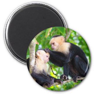 Imã Amor do macaco