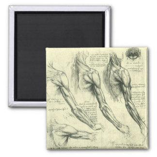 Imã Anatomia do braço e do ombro por Leonardo da Vinci