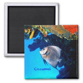 Imã Angelfish de Cozumel