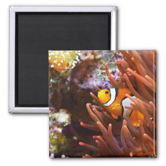 Imã Animais selvagens subaquáticos de Clownfish do mar