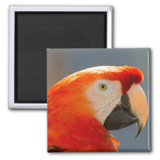 Imã Animais selvagens vermelhos da natureza do pássaro
