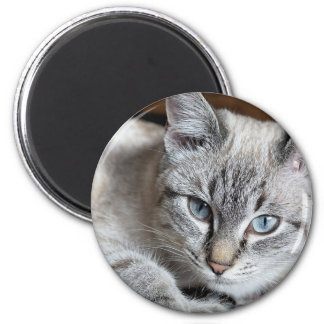 Imã Animal de estimação da cavala de Mieze do gatinho