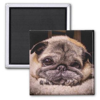 Imã Aqueles olhos do Pug (pintura de Digitas)