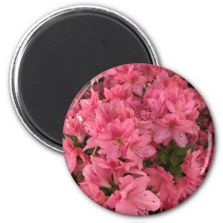 Imã Arbusto de florescência cor-de-rosa brilhante