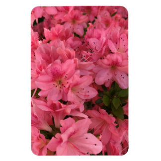 Ímã Arbusto de florescência cor-de-rosa brilhante
